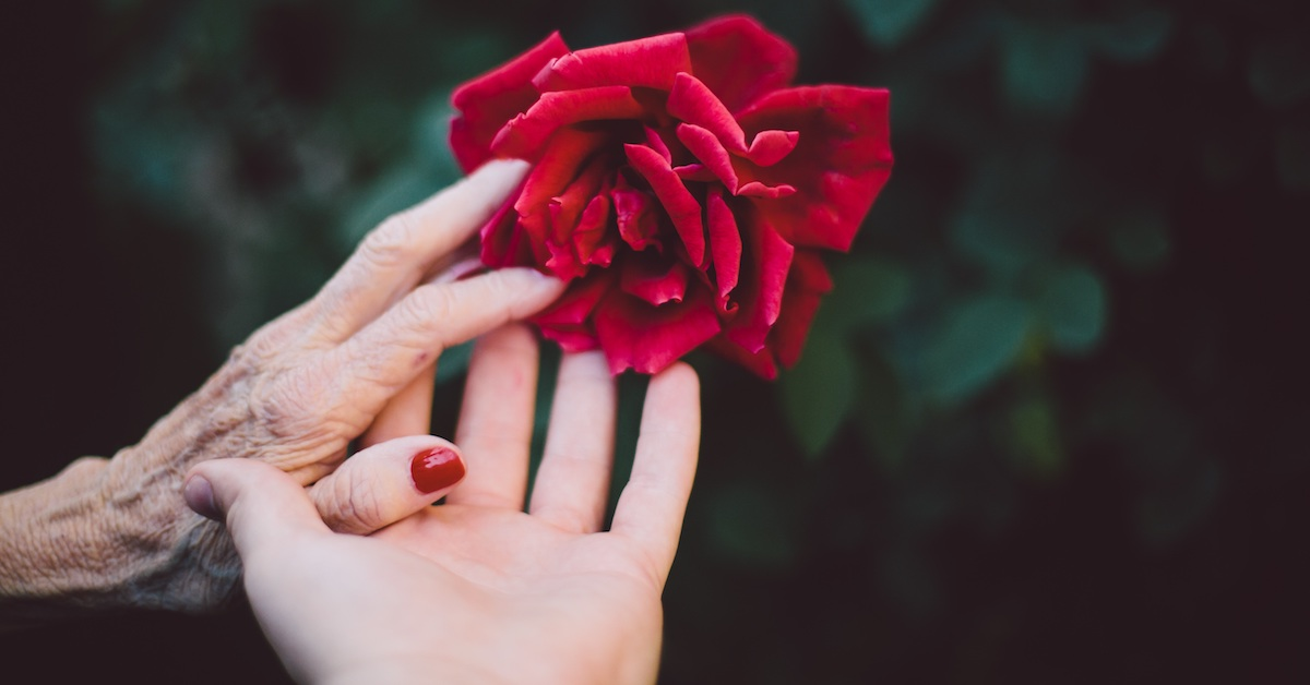 Young hand holding elderly hand and red rose