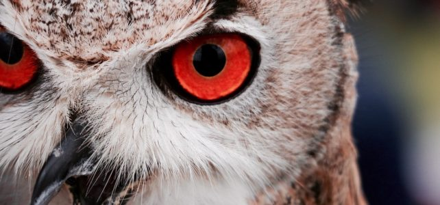 Owl up close; are you bullying?